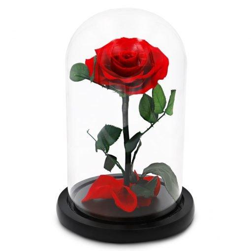 Rote Infinityrose im Glas