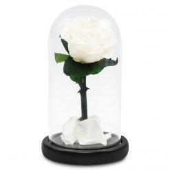 Weiße Infinityrose im Glas