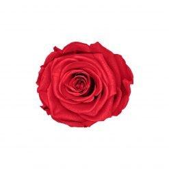 Infinityrose rot