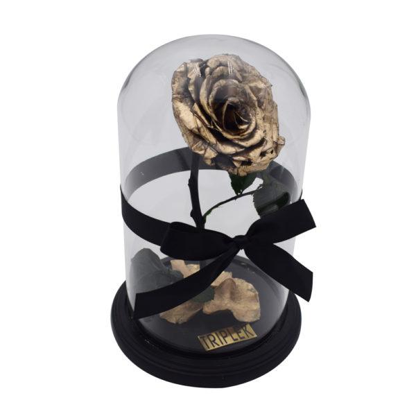 Goldene Rose im Glasskupel