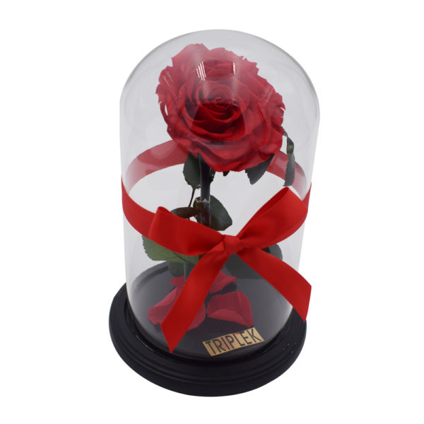 Rote Rose im Glasskupel