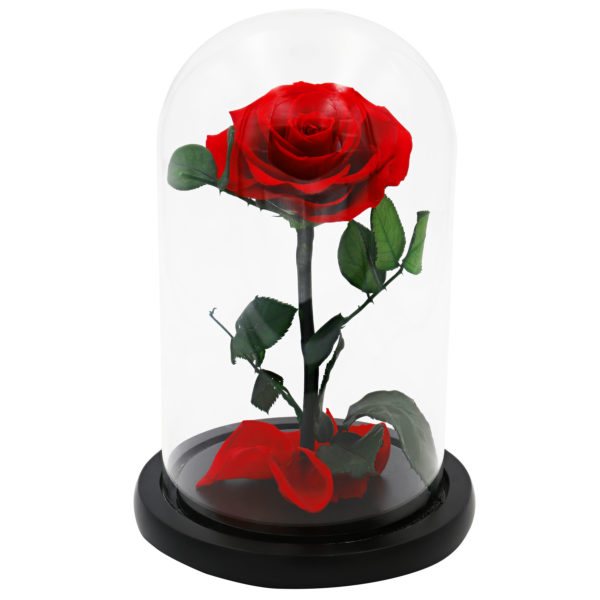 Glass Dome Red