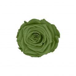 Infinityrose grün