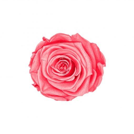 Infinityrose pink