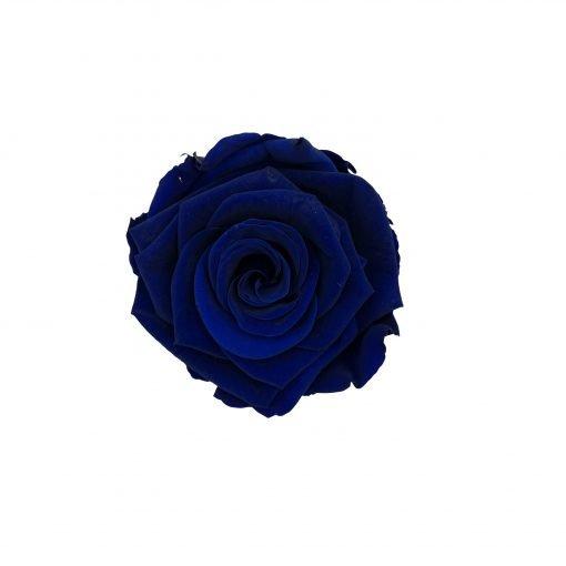 Infinityrose blau von oben