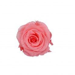 Infinityrose pink von oben