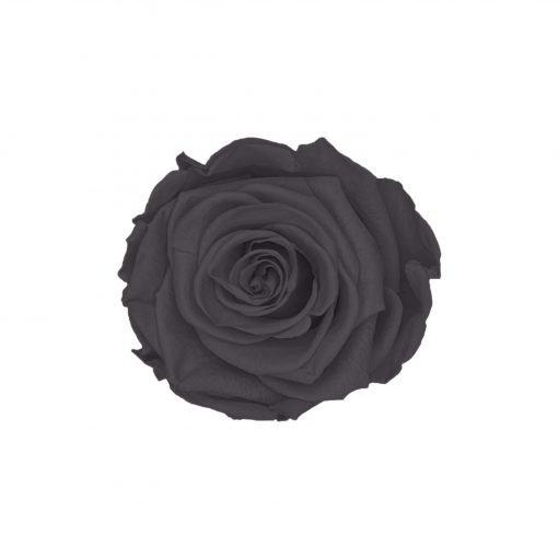 Schwarze Infinityrose
