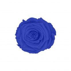 Blaue Infinityrose
