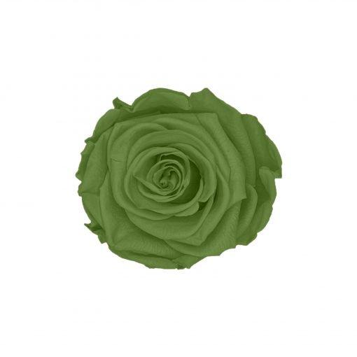 Grüne Infinityrose