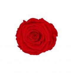 Rote Infinityrose