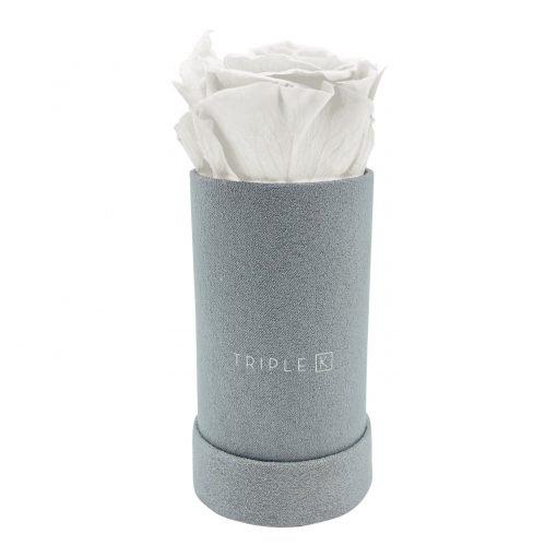 Rosenbox mit einer weißen Infinityrose